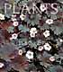 Geranium 'Chocolate Candy'